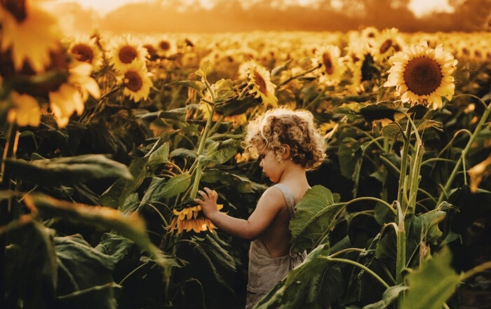 Sunflower field at Holland farms by Jordan Burch Photography